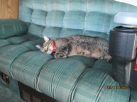 Sully taking a nap on the Rv couch.