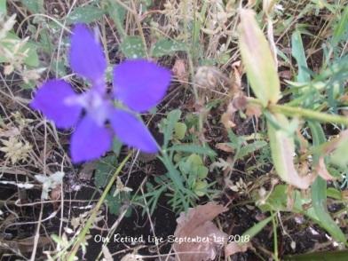 2018 Garden 344 (single late bloomer)